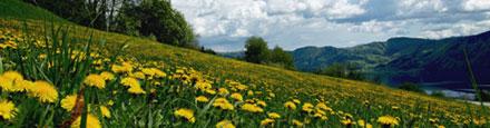 Ferienregion Attergau